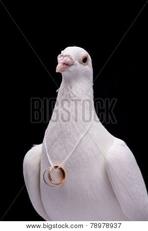 White pigeon and wedding rings