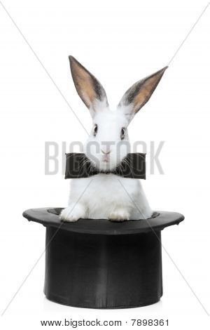 A view of a rabbit with bow tie in a hat