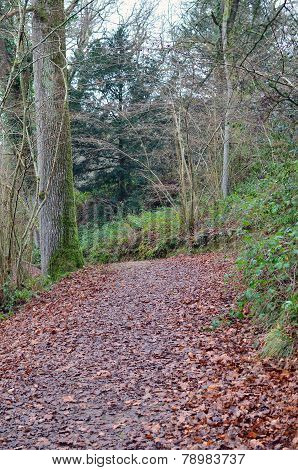 Woodland path covered with Autumn leaves.