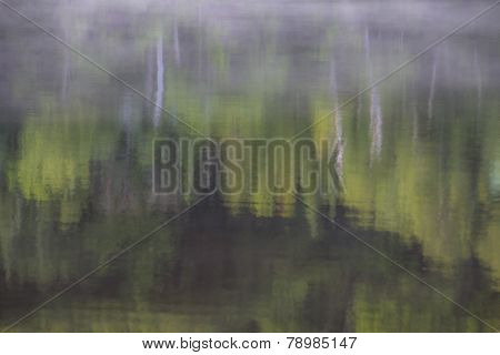 Birch Forest Reflection