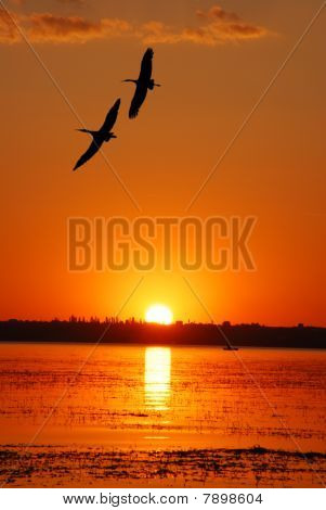 Sunset And Flying Cranes