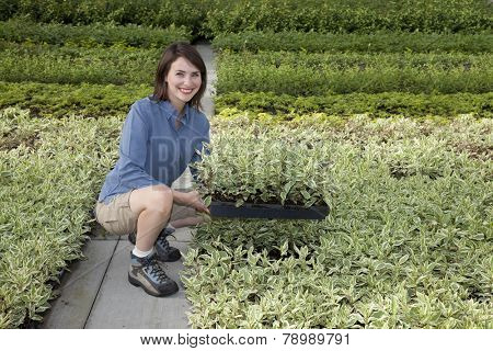 Pretty young woman holding tray of plants