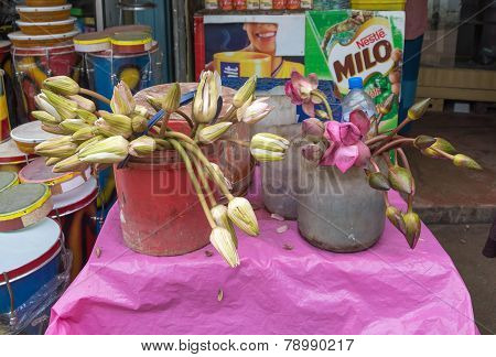 Lotus Flower Buds For Sale