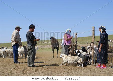 Mongolians recalculate sheep circa Harhorin, Mongolia.