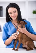 pic of veterinary clinic  - Veterinary clinic - JPG