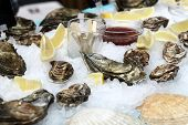 foto of oyster shell  - The oysters with slices of lemon on the ice at a market - JPG