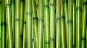 picture of bamboo forest  - green background of fresh hard chinese bamboo - JPG