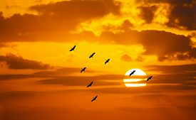 pic of v-day  - v shaped formation flying in an orange sky with a shining sun at sunset - JPG