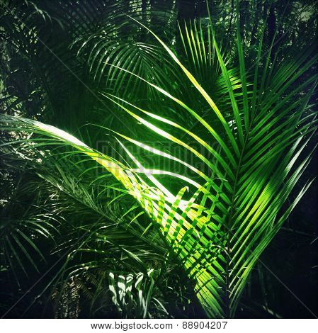 Lush green foliage in tropical jungle