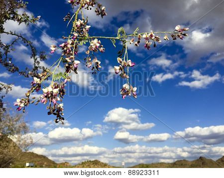 Purple Orchid Tree and Blue Sky