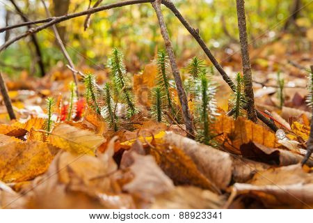 Forest Floor Closeup