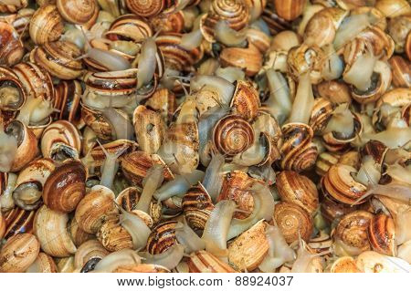 Live Snails For Sale At The Moroccan Souk