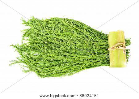 Acacia Pennata Vegetable Isolated On White Background
