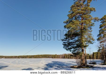 Forest Lake With Snow