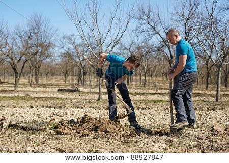 Family Planting A Plum Tree In An Orchard