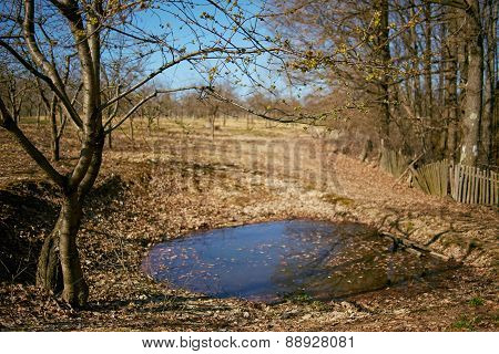 Cherry Tree And Small Lake In A Orchard