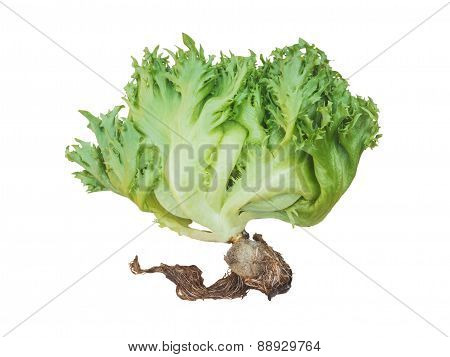 Green Salad Vegetable Isolated