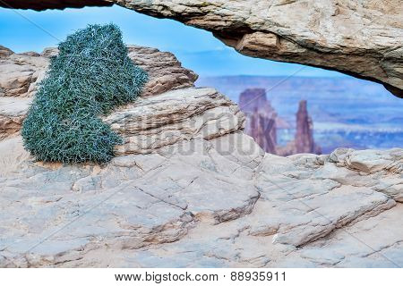 Vegetation At Famous Mesa Arch In Canyonlands National Park Utah  Usa