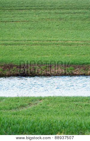 Stripe Of A Water Canal In A Green Field, Upright