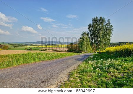 country road through canola field