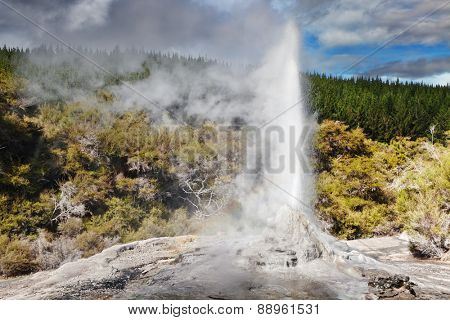 Lady Knox Geyser eruption, Waiotapu, New Zealand