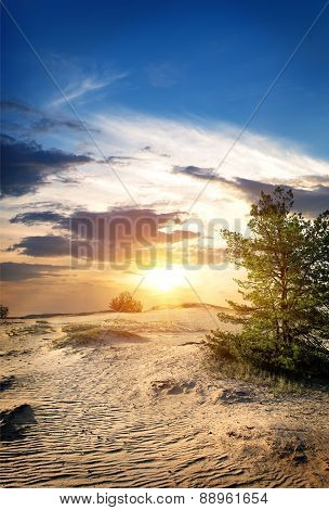 Tree in sand desert