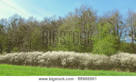 edge of forest in spring