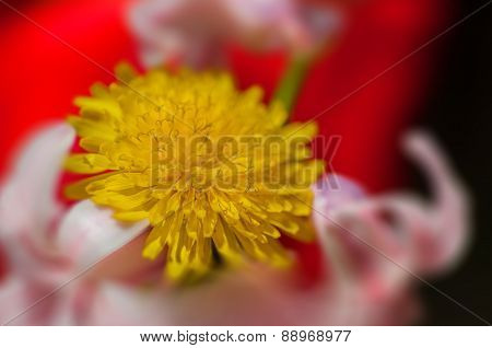 Yellow Dandelion Flower Among Other Flowers