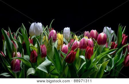Bouquet Of Bright Tulips Blooms