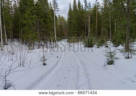 Car Track In The Winter Forest.