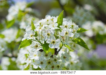 Blooming Flowers On Tree
