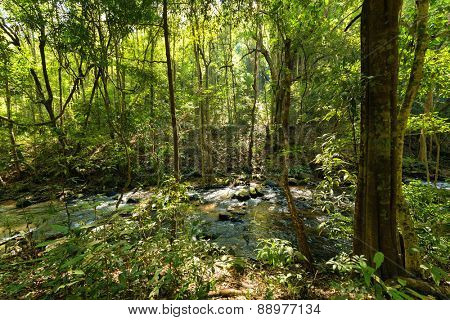 Jungle and river in Inthanon national Park near Chiang Mai, Thailand