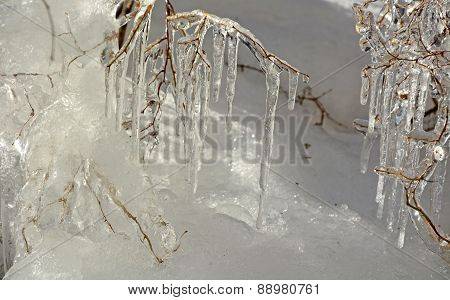 Frozen Branches- Icicles Closeup. Winter Scene, Background