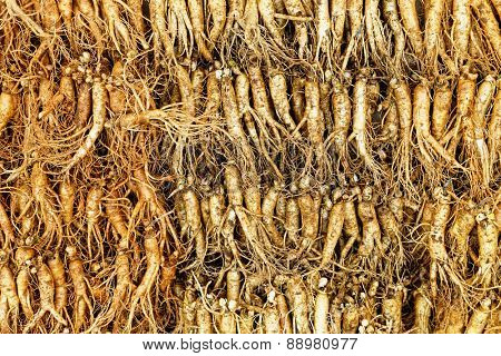 crowd of real ginseng from the North of Korean Republic.