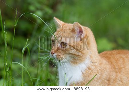 cat in the garden