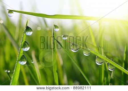 Fresh green grass with dew drops closeup. Nature Background