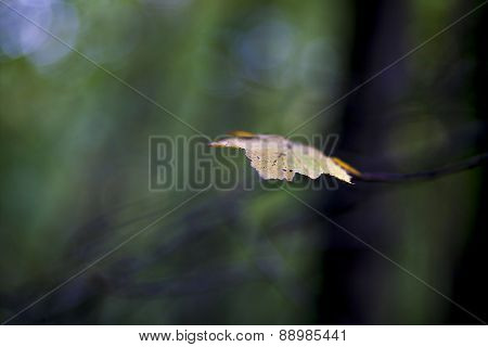 Lonely Leaf In The Autumn Forest