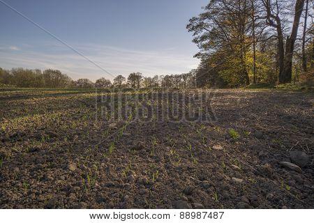 seedlings growing in a farm