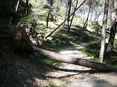 pic of fallen  - Fallen tree in woods near El Chorro Andalucia Spain on path of Caminito del Rey the King - JPG
