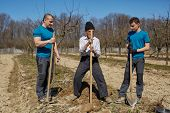 picture of orchard  - Senior farmer teaching his grandson and his son in law how to plant a tree in an orchard three generations family working together - JPG