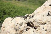 picture of garden snake  - Unlike snakes - JPG
