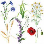 stock photo of wildflower  - Wildflowers set - JPG
