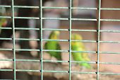 foto of bird fence  - The box is made of wire - JPG