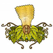 stock photo of hop-plant  - beer label with sheaf hop mug isolated on white - JPG