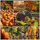 foto of bittersweet  - an array of autum pictures set into a collage - JPG