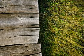 pic of grass  - Wood background - JPG