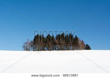 Grove On A Snowy Hill
