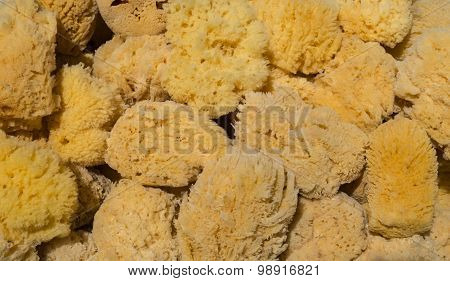 Various Yellow And Brown Sea Sponges
