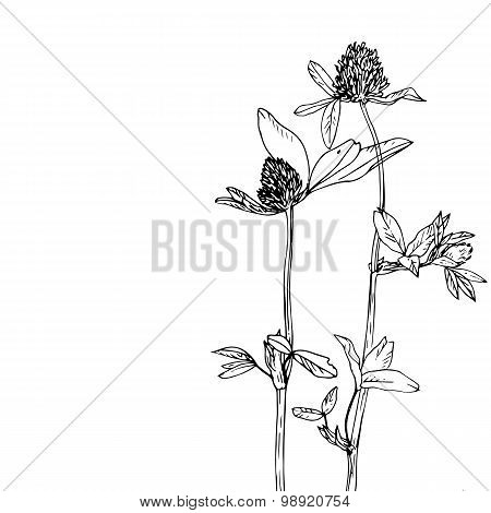 floral composition with clover