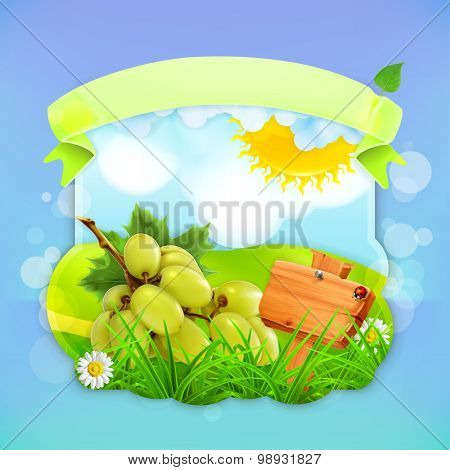 Green grapes, vector label design